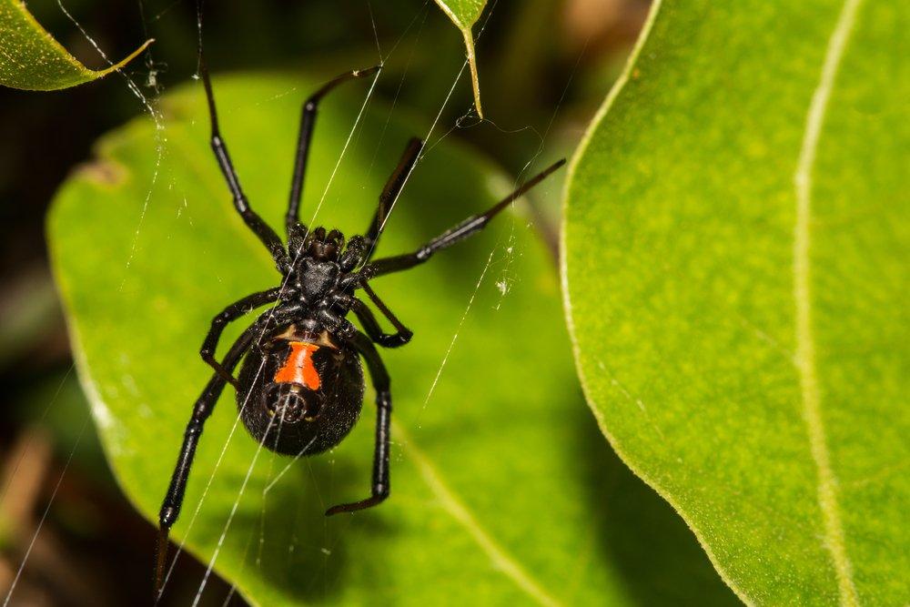 florida pest control services