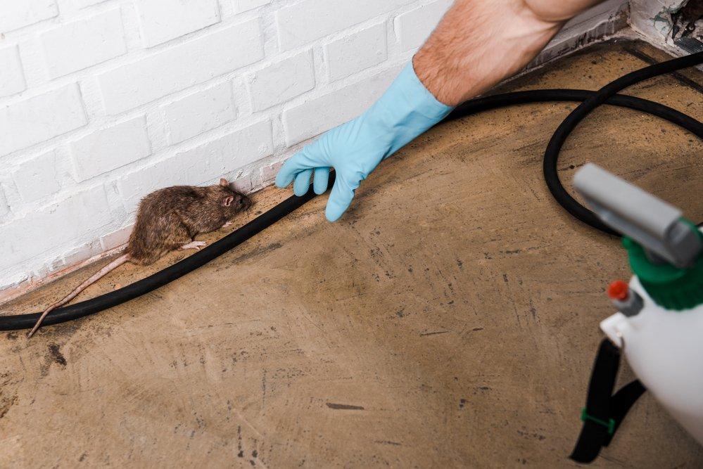 florida pest removal
